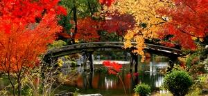 Mùa lá đỏ tuyệt đẹp ở Nhật Bản