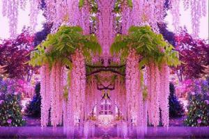 Tháng năm, ngắm hoa Tử đường